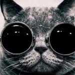 Schrödingers-Cat