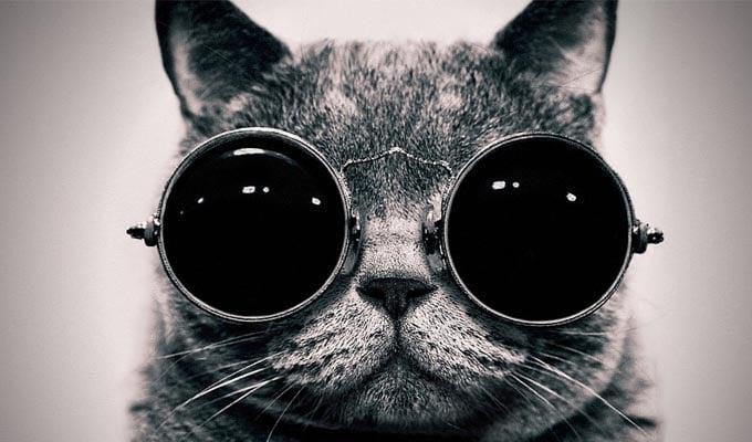 Schrödingers-Cat-fedorafans.com